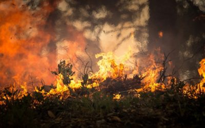 Keeping your Yard Fire Safe