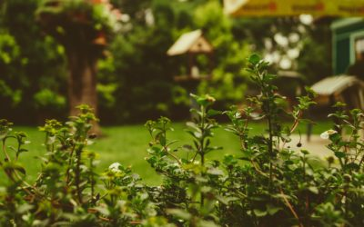 Getting your Yard and Garden Spring Ready