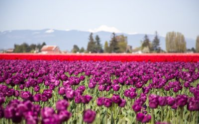 Spring Must- Sees in Oregon